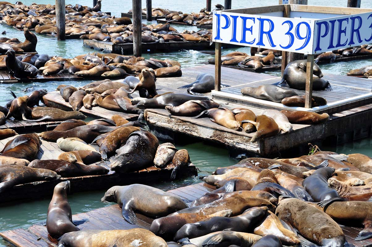 Pier 39  in San Francisco, United States